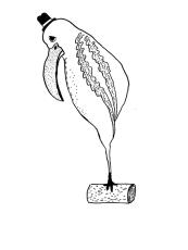 Contemplating One-Legged Parakeet