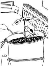 Life in Pot